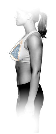 Cooper´s ligaments are connective tissue in the breast that help maintain structural integrity